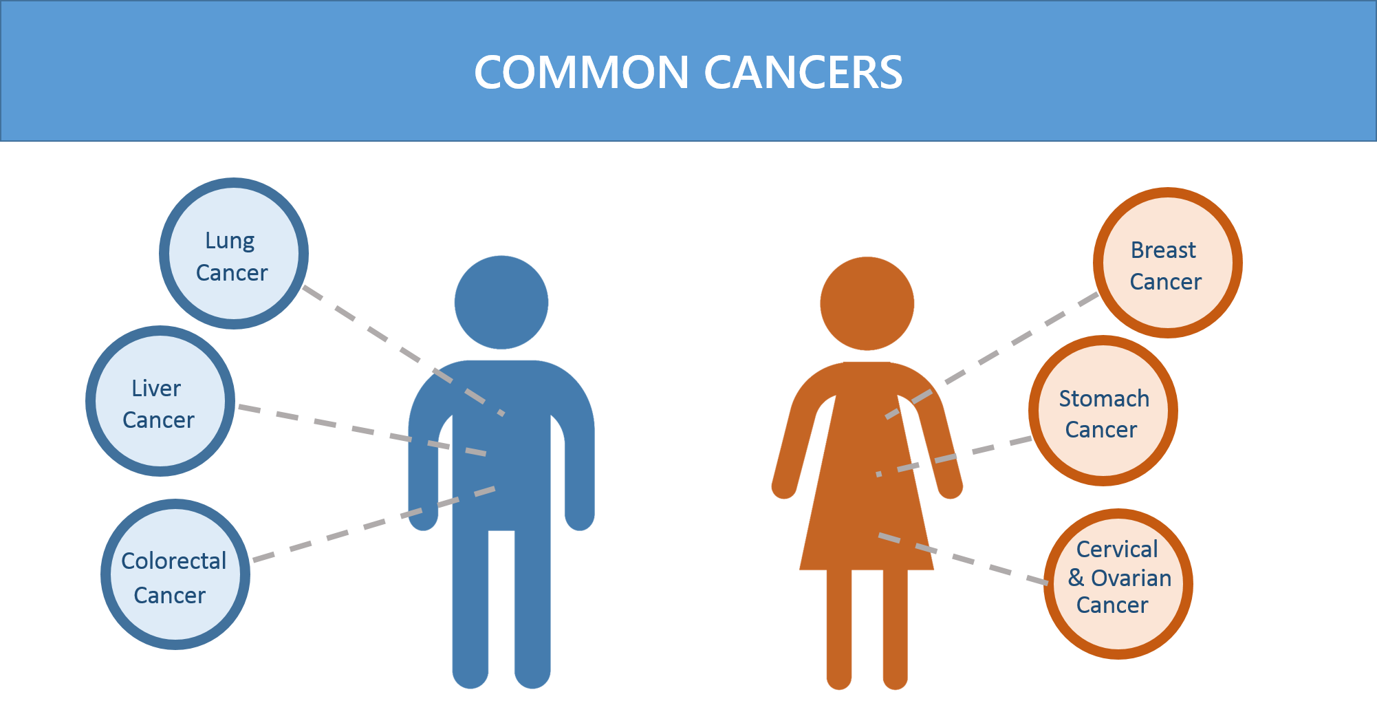 Common cancers infographic