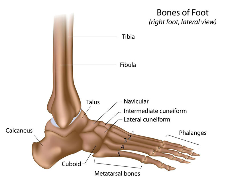 Foot & Ankle Injuries and Treatment | Gleneagles Hospital