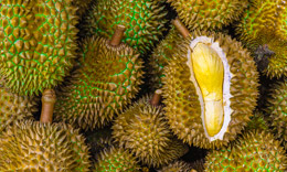 Durian benefits