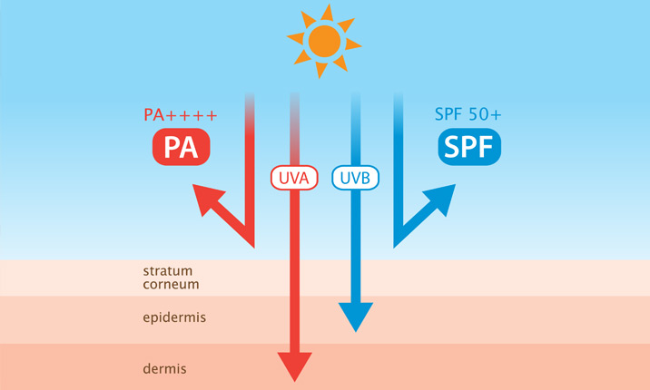 SPF and PA levels