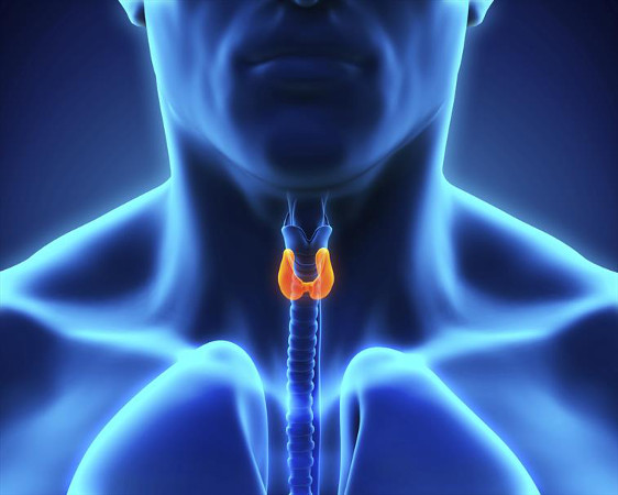 thyroid image